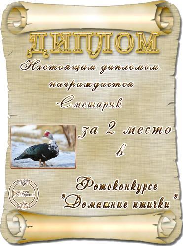 Фотоконкурс Домашние птички. Поздравляем победителей. _90865d0064e7ce53ccbbff15f1f1662d