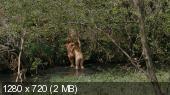 Небесные жёны луговых мари (2012) BDRip 720p