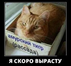 Подборка лучших демотиваторов №397